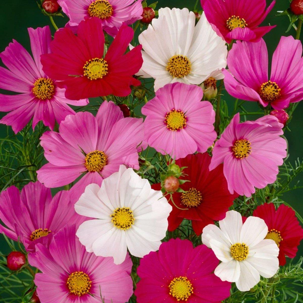 Садовые цветы смотреть картинки