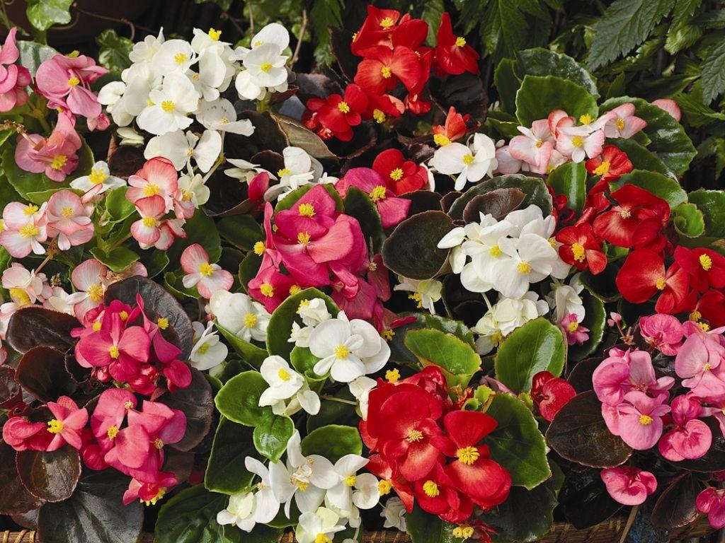 полностью цветы для сада и комнатные фото балконы стоит